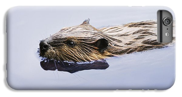 View Of Beaver, Chaudiere-appalaches IPhone 6 Plus Case by Yves Marcoux