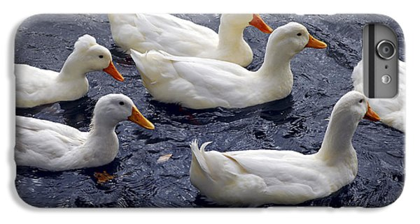 Goose iPhone 6 Plus Case - White Ducks by Elena Elisseeva