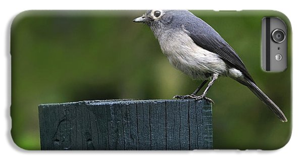 White-eyed Slaty Flycatcher IPhone 6 Plus Case by Tony Beck