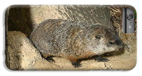 Woodchuck IPhone 6 Plus Case by Ted Kinsman