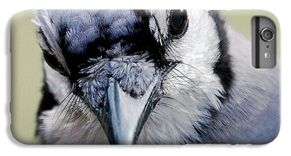 Bluejay iPhone 6 Plus Case -  Blue Jay by Skip Willits