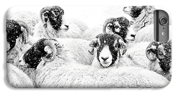 Sheep iPhone 6 Plus Case -  In Winters Grip by Janet Burdon