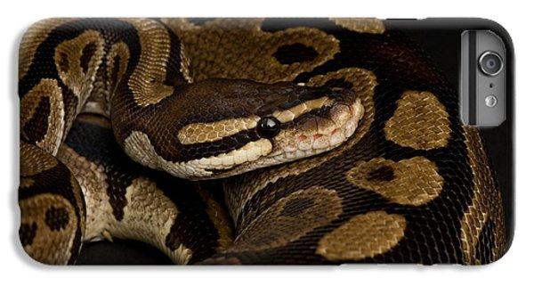 Burmese Python iPhone 6 Plus Case - A Ball Python Python Regius by Joel Sartore