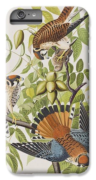 American Sparrow Hawk IPhone 6 Plus Case by John James Audubon