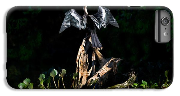 Anhinga Anhinga Anhinga, Pantanal IPhone 6 Plus Case by Panoramic Images