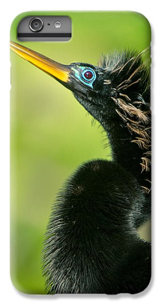 Anhinga Anhinga Anhinga, Tortuguero IPhone 6 Plus Case by Panoramic Images