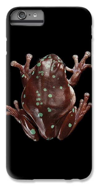 Australian Green Tree Frog, Or Litoria Caerulea Isolated Black Background IPhone 6 Plus Case by Sergey Taran