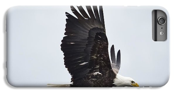Bald Eagle IPhone 6 Plus Case