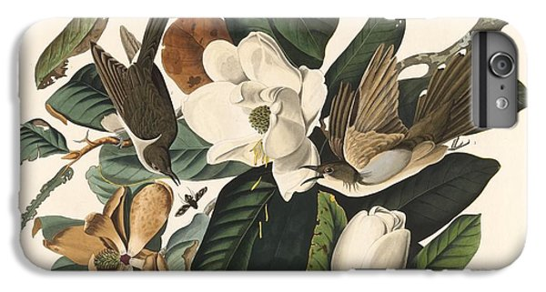 Black-billed Cuckoo IPhone 6 Plus Case by Dreyer Wildlife Print Collections