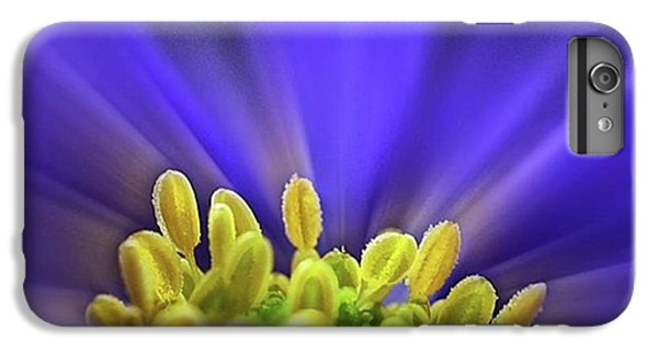 blue Shades - An Anemone Blanda IPhone 6 Plus Case