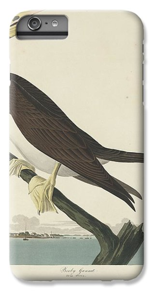 Boobies iPhone 6 Plus Case - Booby Gannet by Dreyer Wildlife Print Collections