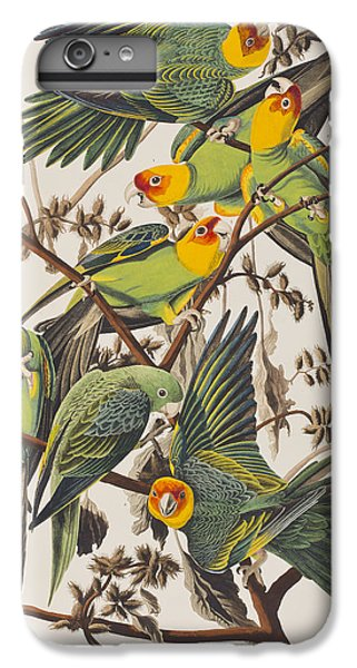 Carolina Parrot IPhone 6 Plus Case