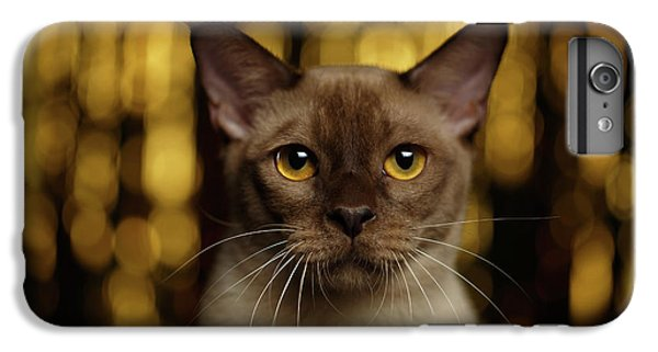 Cat iPhone 6 Plus Case - Closeup Portrait Burmese Cat On Happy New Year Background by Sergey Taran