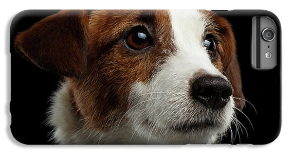 Dog iPhone 6 Plus Case -  Closeup Portrait Of Jack Russell Terrier Dog On Black by Sergey Taran