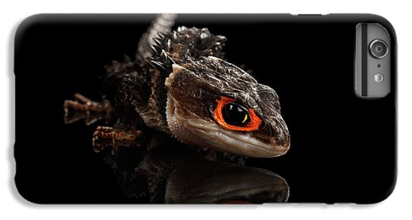 Closeup Red-eyed Crocodile Skink, Tribolonotus Gracilis, Isolated On Black Background IPhone 6 Plus Case by Sergey Taran
