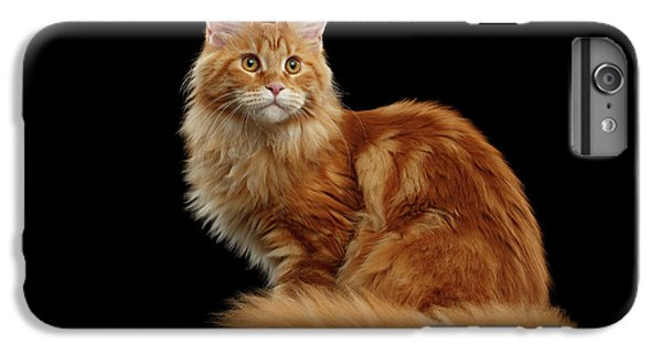 Cat iPhone 6 Plus Case - Ginger Maine Coon Cat Isolated On Black Background by Sergey Taran