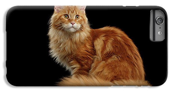 Ginger Maine Coon Cat Isolated On Black Background IPhone 6 Plus Case