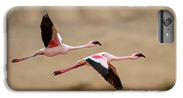 Greater Flamingos Phoenicopterus Roseus IPhone 6 Plus Case