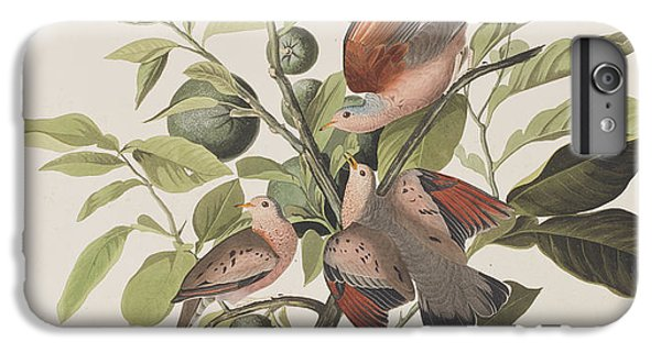 Ground Dove IPhone 6 Plus Case by John James Audubon