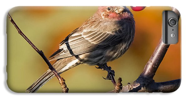 House Finch IPhone 6 Plus Case by Ricky L Jones