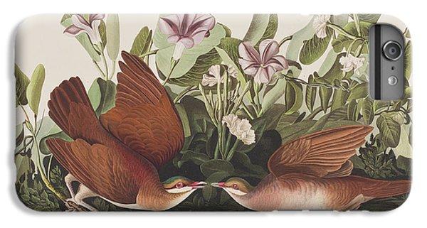 Key West Dove IPhone 6 Plus Case by John James Audubon