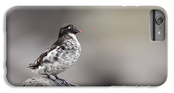 Auklets iPhone 6 Plus Case - Least Auklet by Tom Ingram