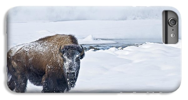 Lone Bison IPhone 6 Plus Case