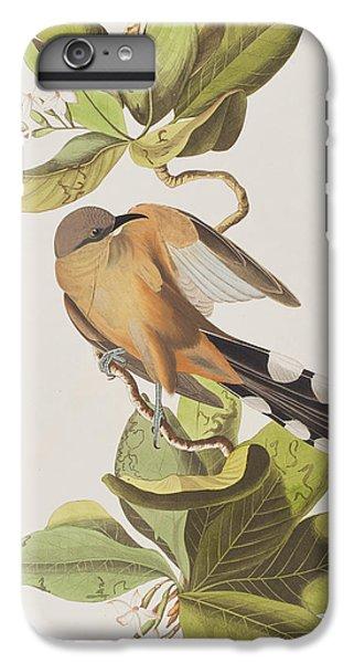 Mangrove Cuckoo IPhone 6 Plus Case by John James Audubon