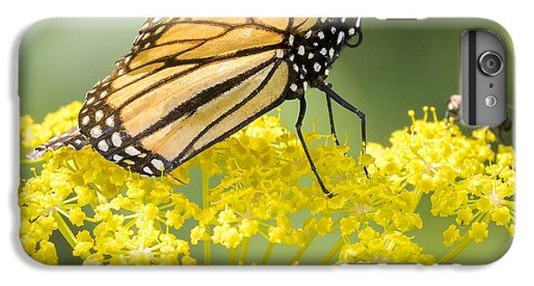 Monarch Butterfly IPhone 6 Plus Case by Ricky L Jones