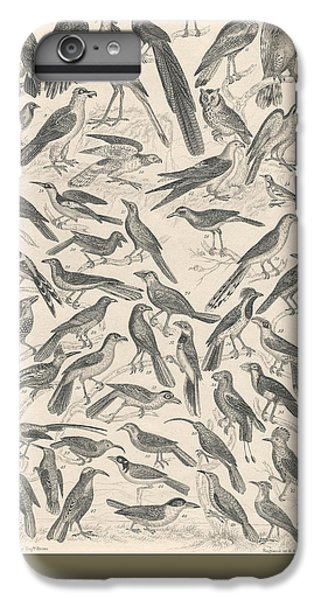 Condor iPhone 6 Plus Case - Ornithology by Dreyer Wildlife Print Collections
