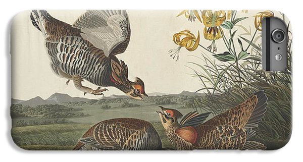 Pinnated Grouse IPhone 6 Plus Case by Rob Dreyer