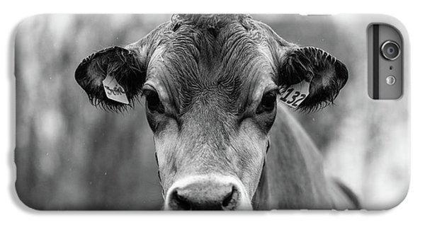 iPhone 6 Plus Case - Portrait Of A Dairy Cow In The Rain Stowe Vermont by Edward Fielding