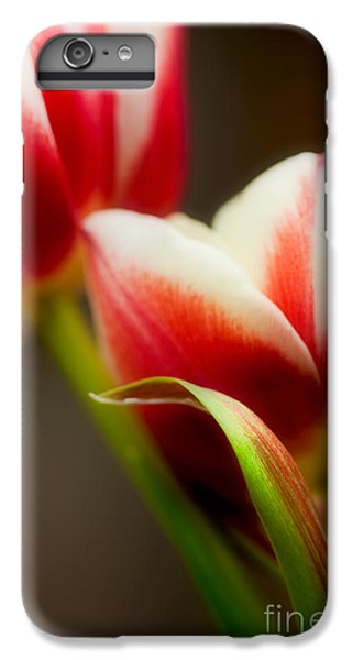 Tulip iPhone 6 Plus Case - Red And White Tulips by Nailia Schwarz