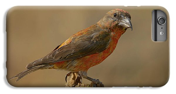 Red Crossbill IPhone 6 Plus Case by Doug Herr