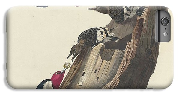 Red-headed Woodpecker IPhone 6 Plus Case by Dreyer Wildlife Print Collections
