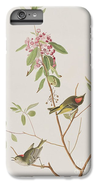 Ruby Crowned Wren IPhone 6 Plus Case