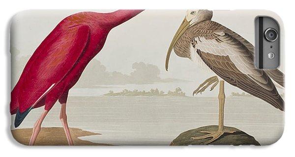 Scarlet Ibis IPhone 6 Plus Case