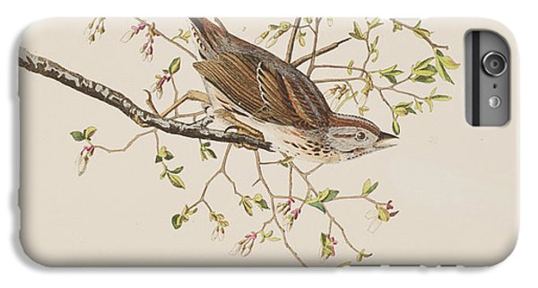 Song Sparrow IPhone 6 Plus Case by John James Audubon