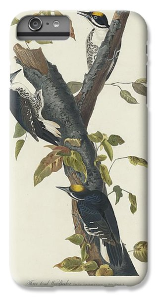 Three-toed Woodpecker IPhone 6 Plus Case by Dreyer Wildlife Print Collections
