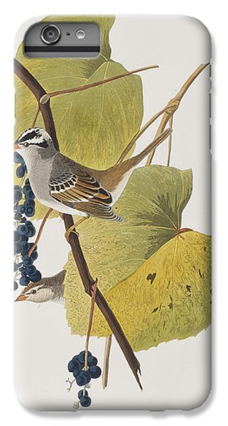 White-crowned Sparrow IPhone 6 Plus Case