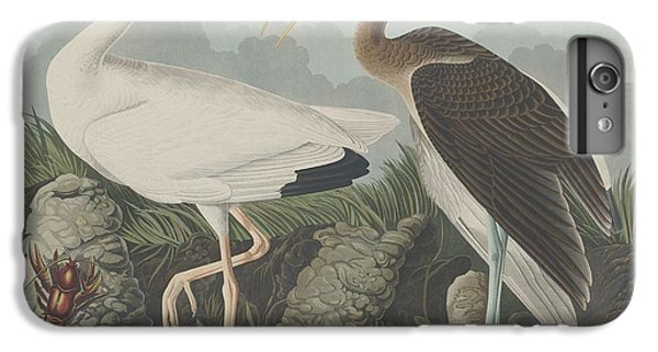 Ibis iPhone 6 Plus Case - White Ibis by Dreyer Wildlife Print Collections