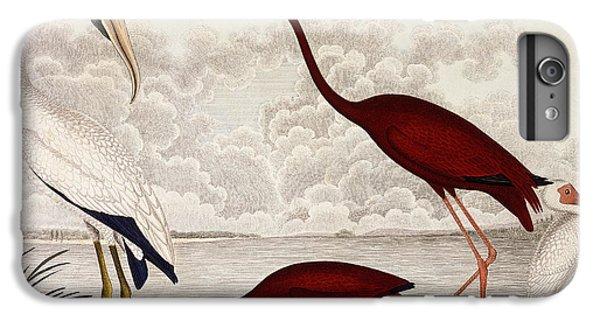 Wood Ibis, Scarlet Flamingo, White Ibis IPhone 6 Plus Case by Alexander Wilson