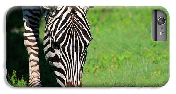 Zebra IPhone 6 Plus Case by Sebastian Musial