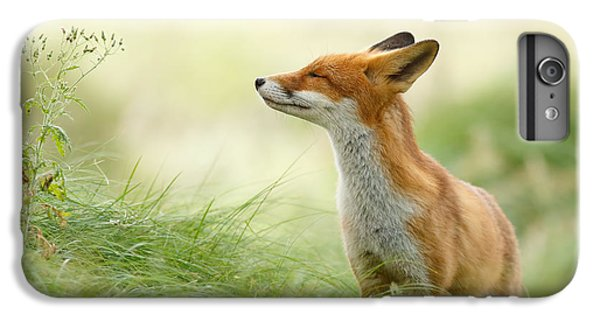 Mammals iPhone 6 Plus Case - Zen Fox Series - Zen Fox by Roeselien Raimond