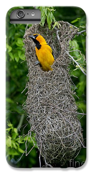 Altamira Oriole IPhone 6 Plus Case