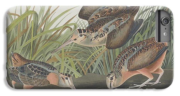 American Woodcock IPhone 6 Plus Case by Rob Dreyer