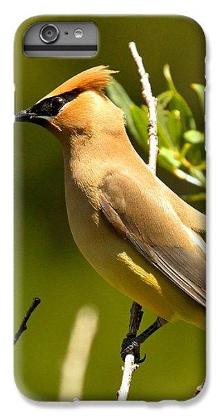 Cedar Waxwing Closeup IPhone 6 Plus Case by Adam Jewell