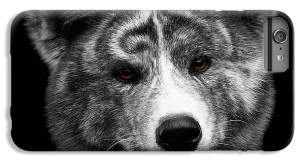 Dog iPhone 6 Plus Case - Closeup Portrait Of Akita Inu Dog On Isolated Black Background by Sergey Taran