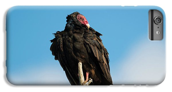 Looking For A Meal IPhone 6 Plus Case by Mike Dawson