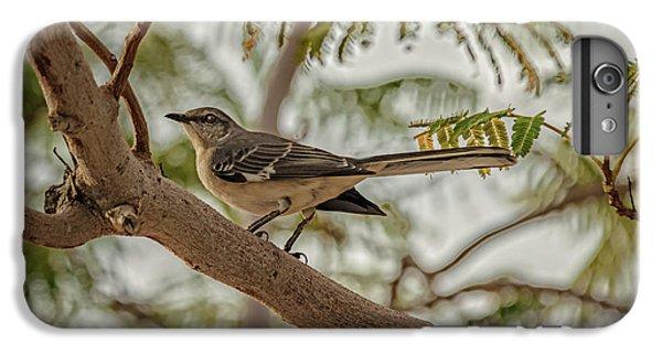 Mockingbird iPhone 6 Plus Case - Mockingbird by Robert Bales